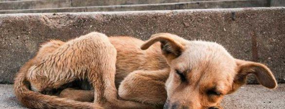 Mascotas sin hogar